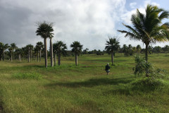 First Bird Count in Cuba's National Botanic Garden