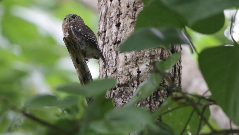 VIN-owl